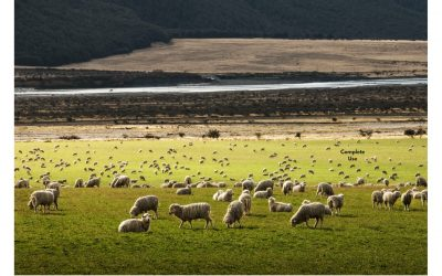 What are the Disadvantages of Merino Wool?